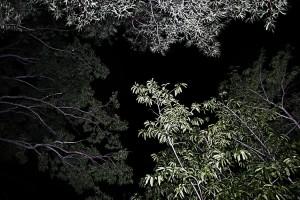 Nocturno VI